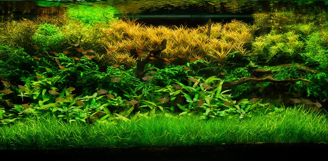 Live Plants Allowed The Cichlid Stage